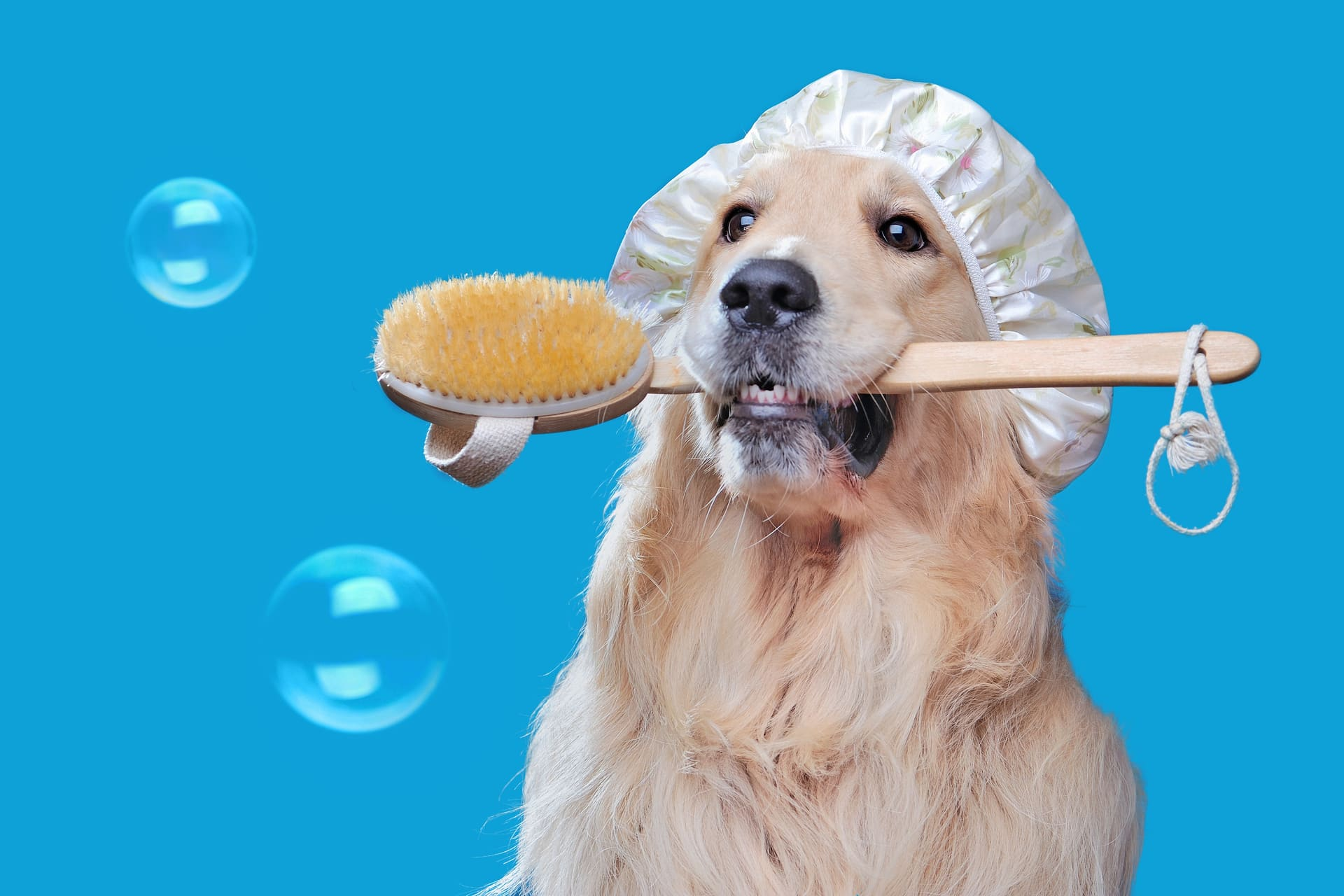 DOG CARE SALON fluffy - フラッフィー